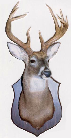 Deer Head Mount >> Deer Head Wall Mounts Shipping Nationwide